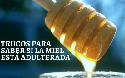 Trucos para saber si la miel está adulterada